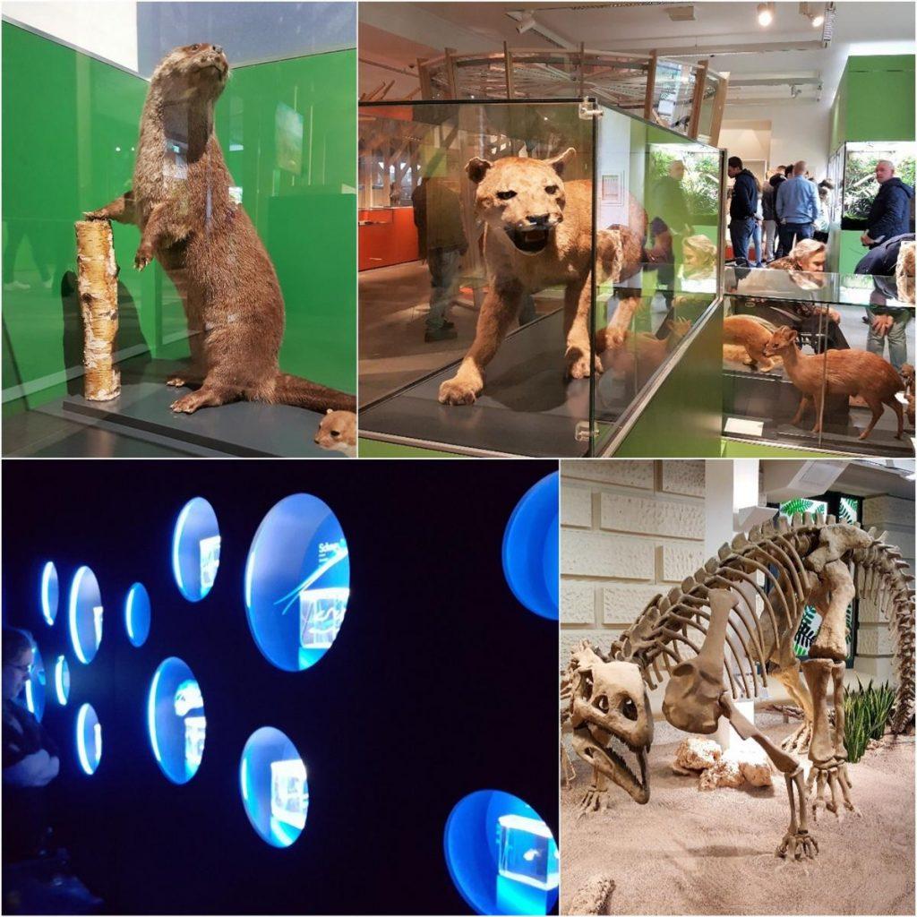 Style Hannover Landesmuseum NaturWelt Collage 4 1024x1024 - Niedersächsisches Landesmuseum Hannover