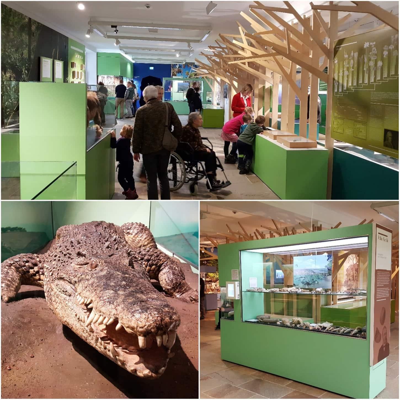 Style Hannover Landesmuseum NaturWelt Collage III - NaturWelten - die ständige Ausstellung im Landesmuseum