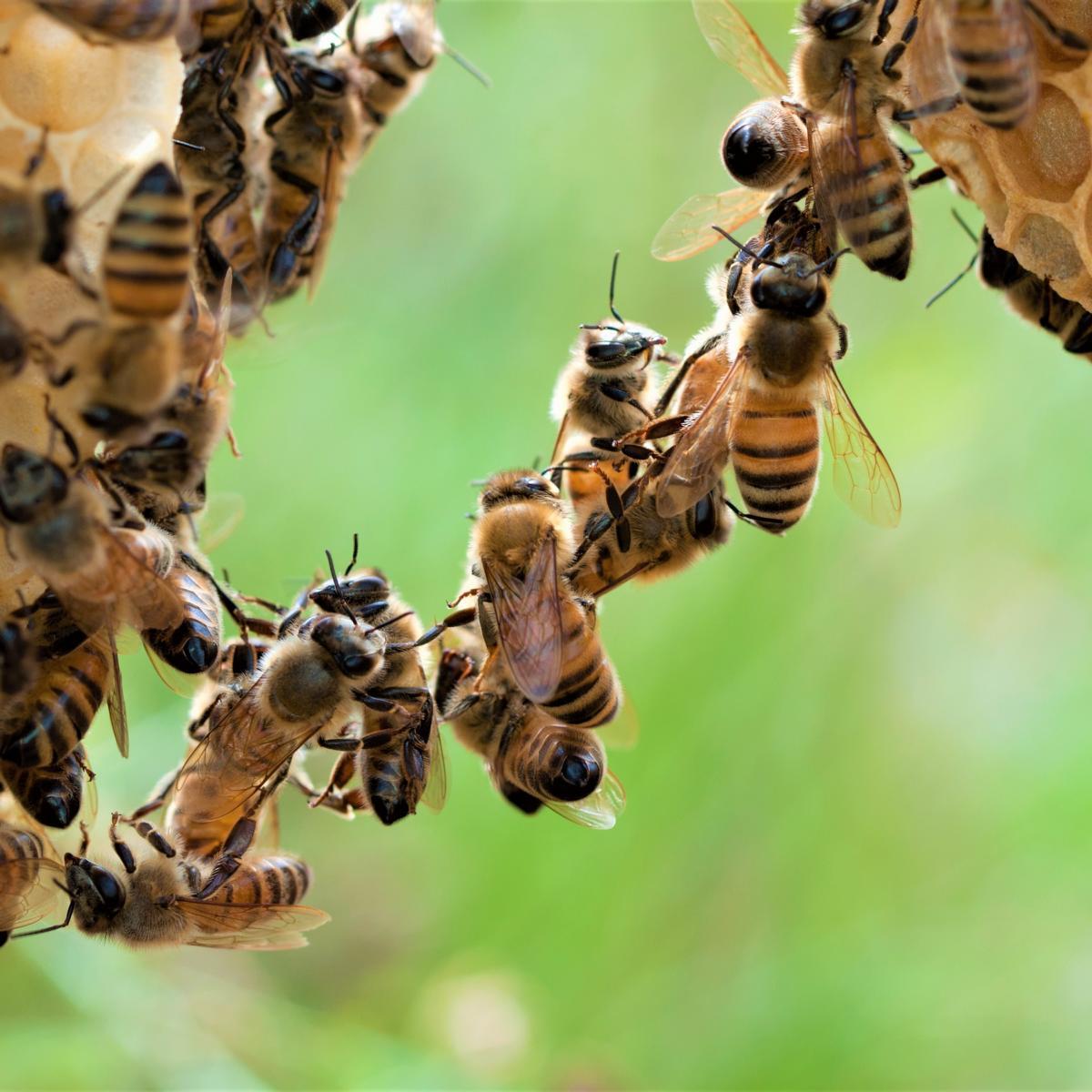 Style Hannover Die Bienenhuette 6 - Die Bienenhütte - Wesensgemäße Bienenhaltung