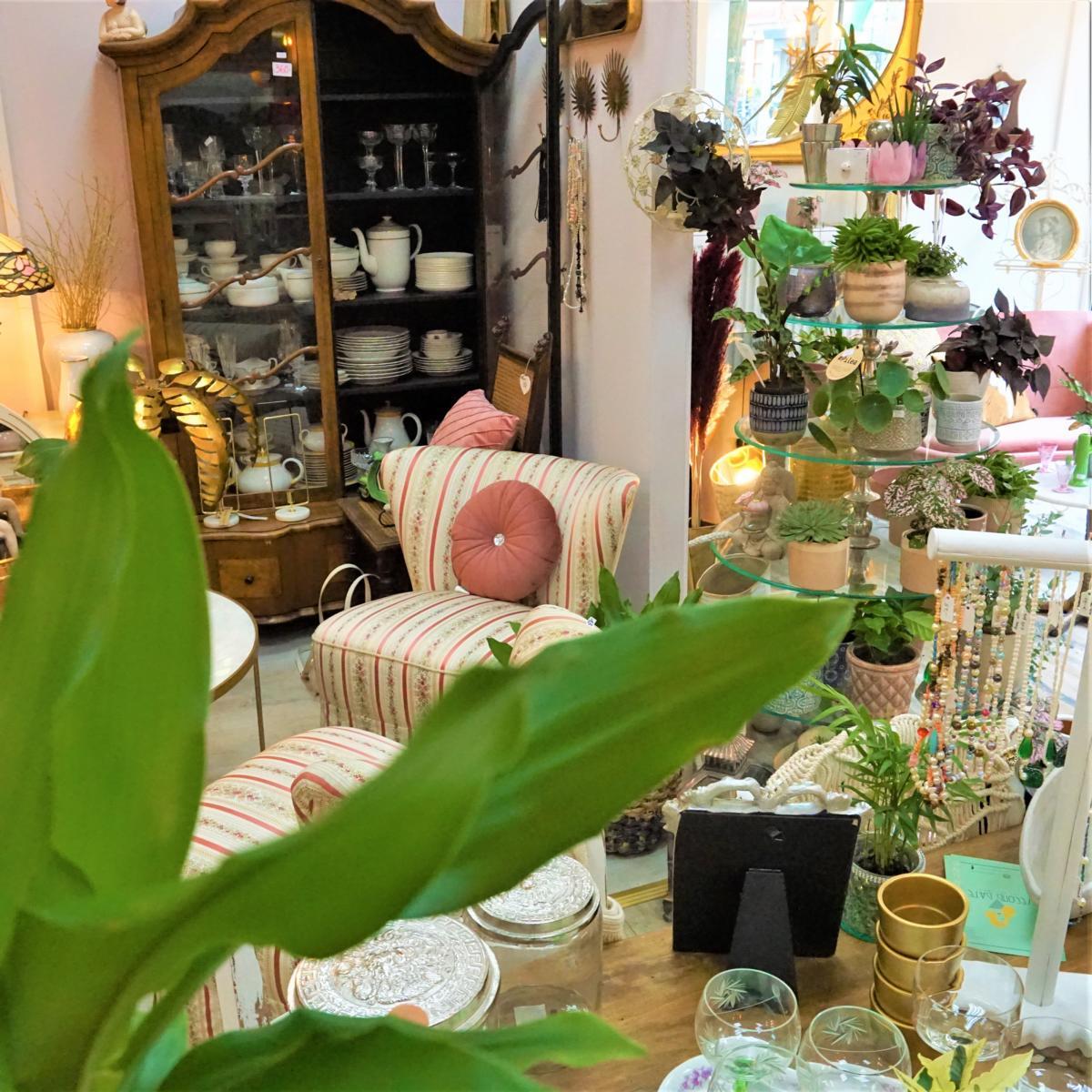 Style Hannover Second Date 3 - Second Date: Pflanzen & Antiquitäten
