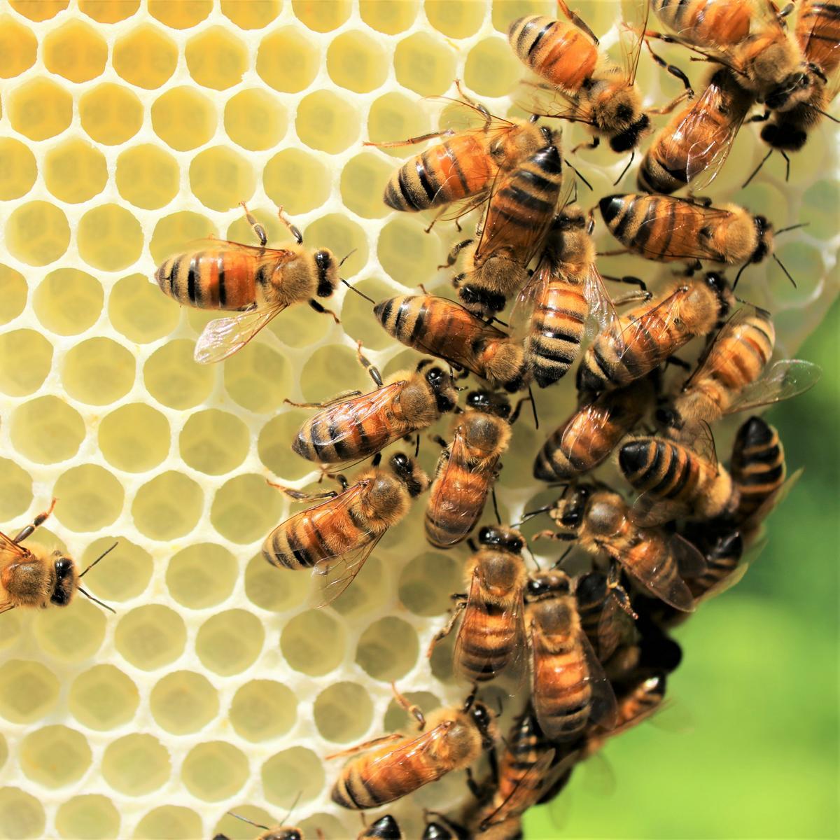 Style Hannover Die Bienenhuette 1 1 - Die Bienenhütte - Wesensgemäße Bienenhaltung