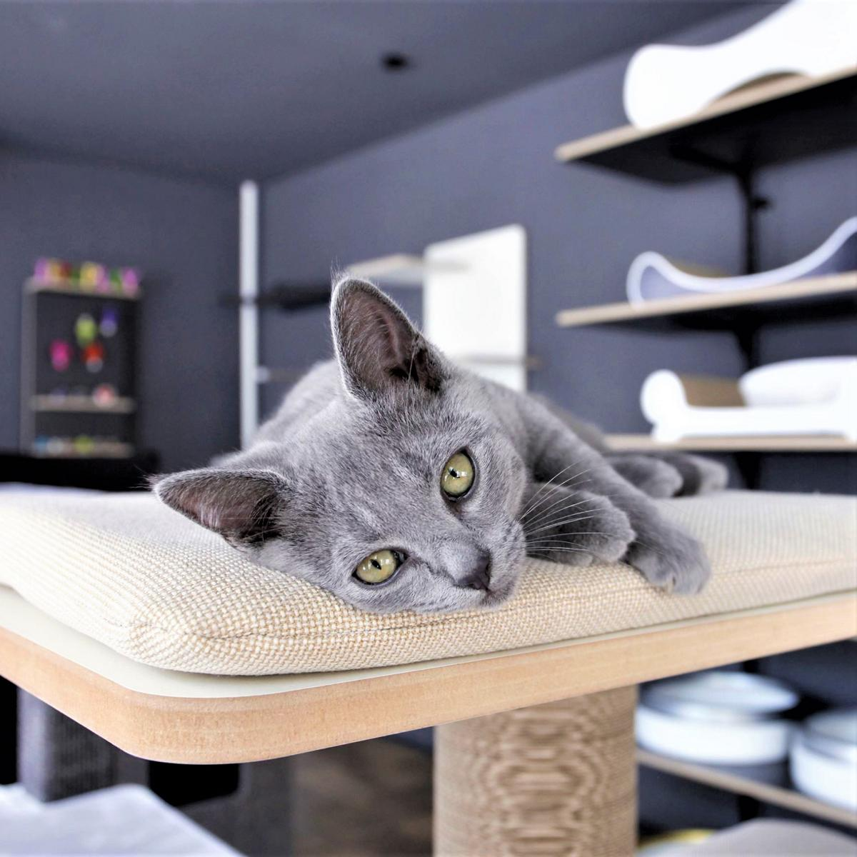 style hannover styleCats 1 - stylecats® - Katzenmöbel