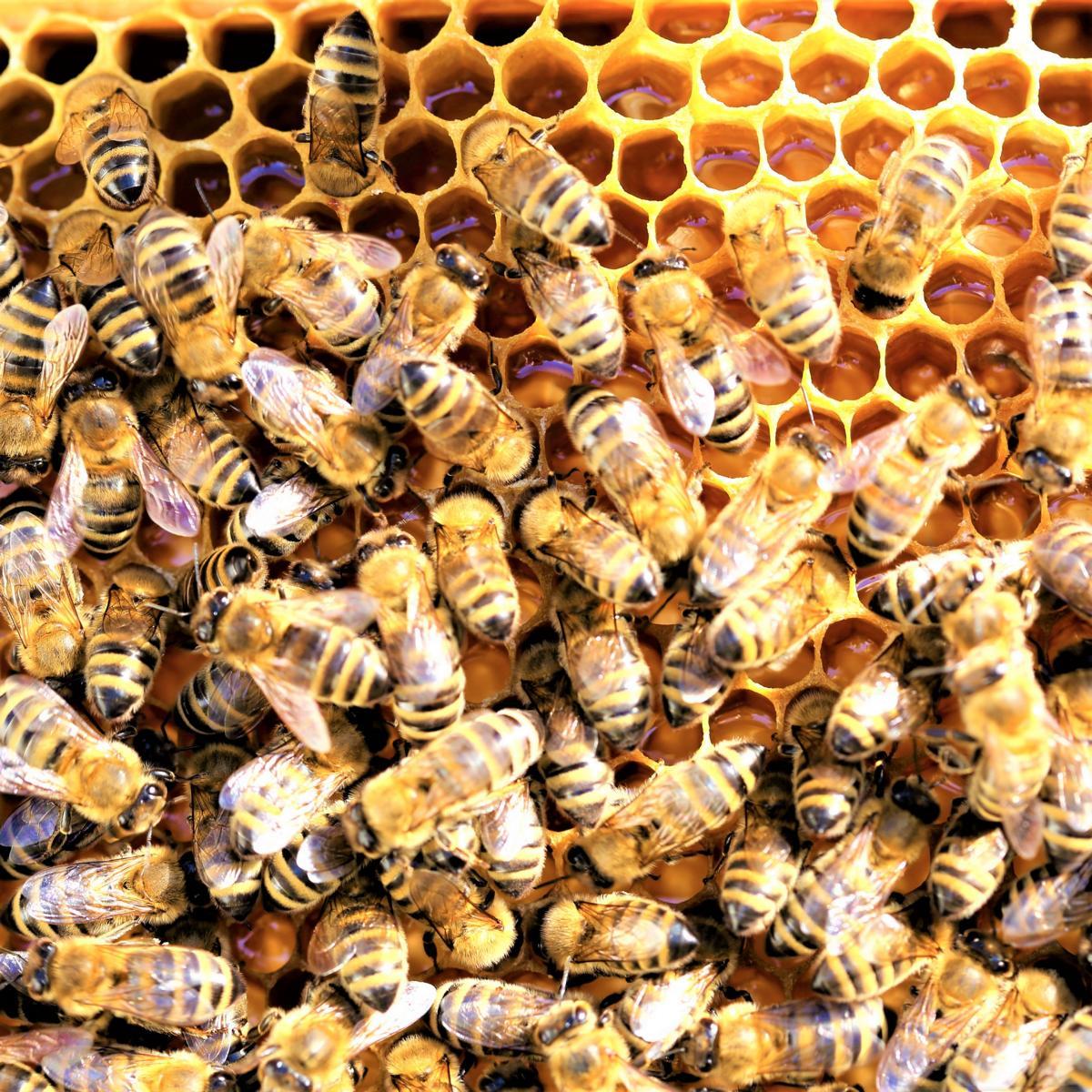 Style Hannover Die Bienenhuette 4 - Die Bienenhütte - Wesensgemäße Bienenhaltung