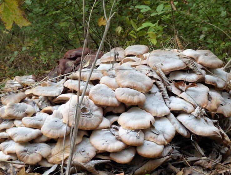 Style Hannover stellt Pilze in der Eilenriede vor.
