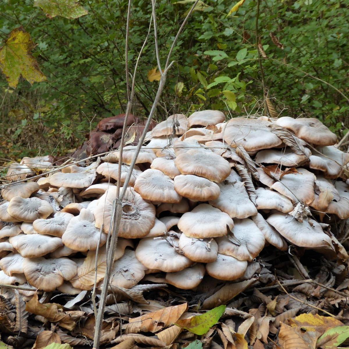 style hannover pilze in der eilenriede B2 - Pilze in der Eilenriede - fast wie Ostereier suchen