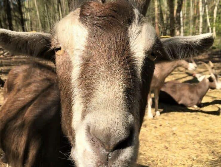 Style Hannover stellt Heim für Tiere vor.