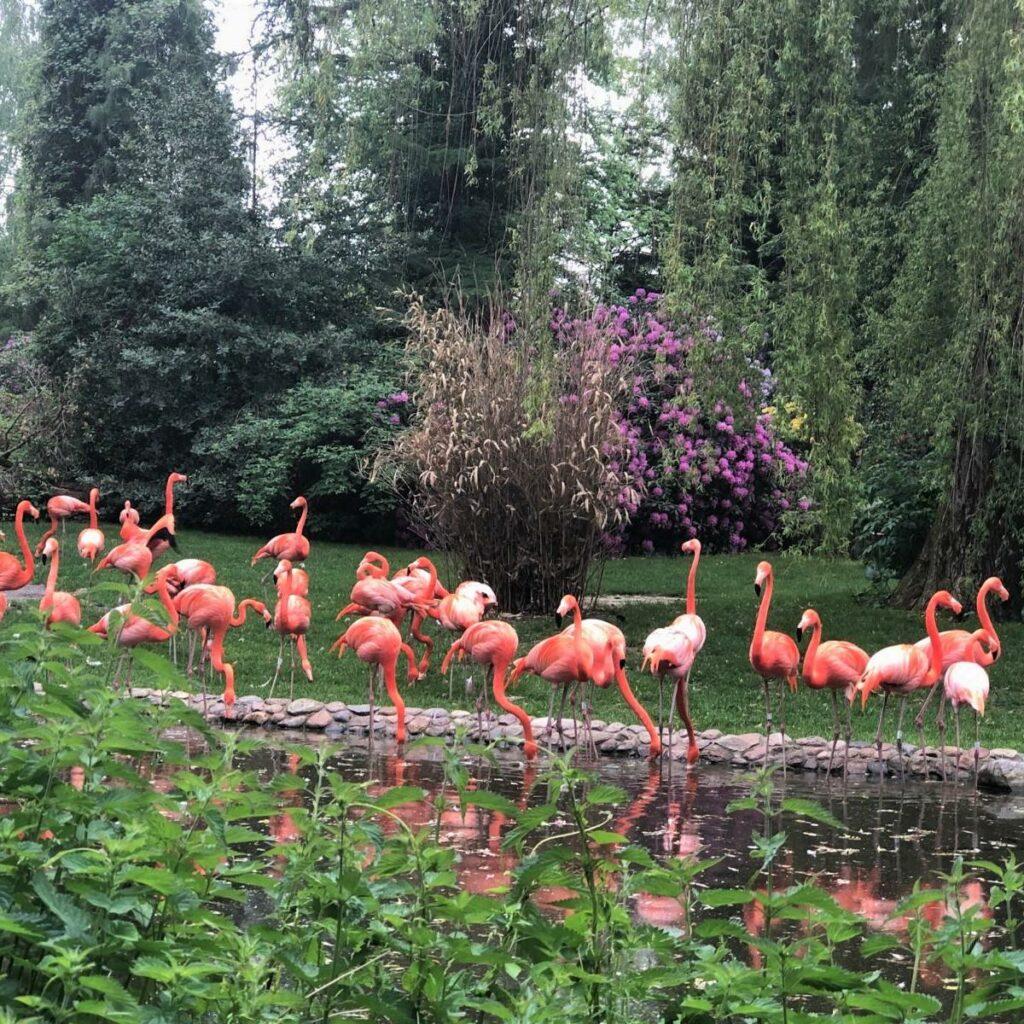 style hannover vogelpark walsrode 9 1024x1024 - Der größte Vogelpark der Welt – ist in Walsrode ...