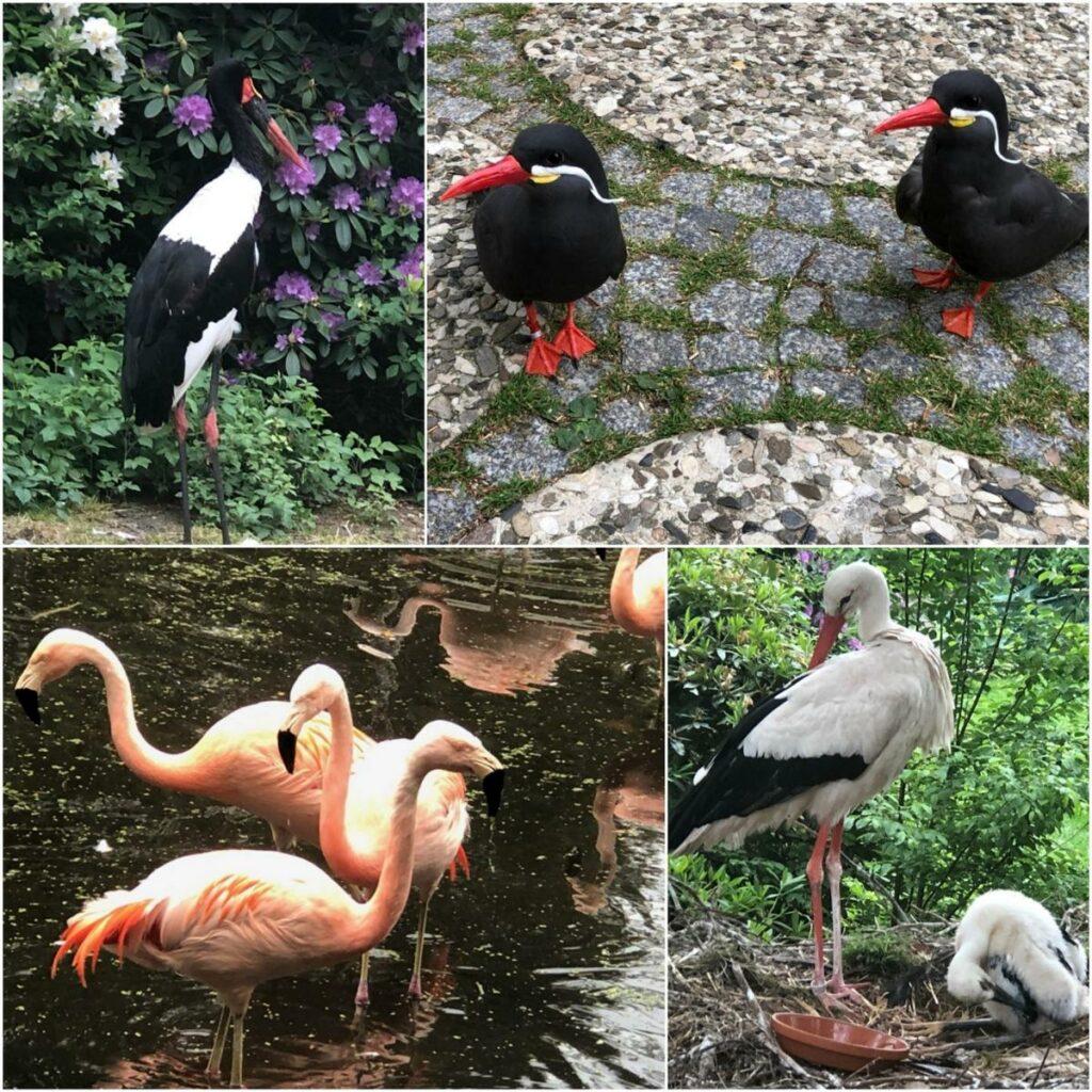 style hannover vogelpark walsrode collage 1 1024x1024 - Der größte Vogelpark der Welt – ist in Walsrode ...