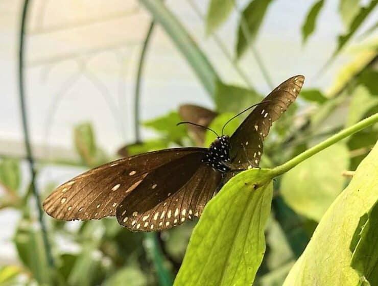 style hannover schmetterlingsfarm B 740x560 - Schmetterlingsfarm Steinhude - Ohne Glas und Gitter